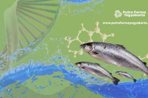 DNA Salmon Untuk Basmi 5 Masalah Kulit Anda